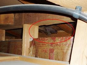 中古一戸建てホームインスペクション現場事例 ~天井裏の雨漏り・不具合